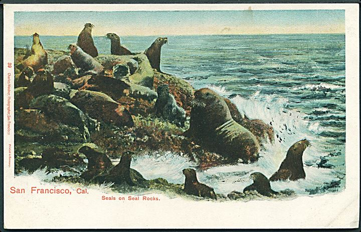 Seals on Seal Rocks, San Francisco, Cal. Charles Weidner no. 39. Uden adresselinier.