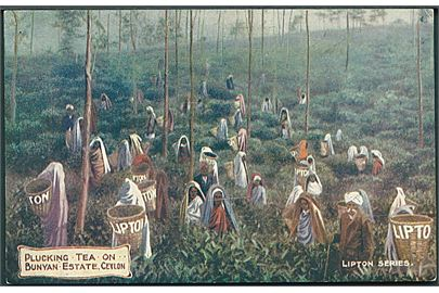 Plucking Tea on Bunyan Estate, Ceylon. Lipton Series. Photochrom Co. u/no.