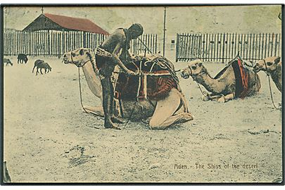 Aden. The Shiss of the desert. No. 3270.