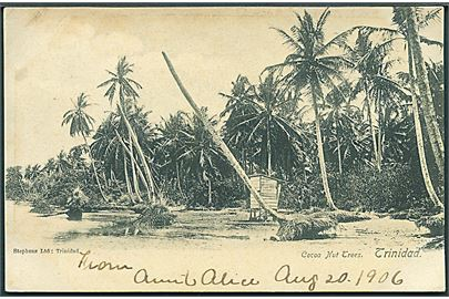Trinidad. Cocoa Nut Trees. Frankeret med 1d stemplet Port of Spain d. 20.8.1906 til USA.