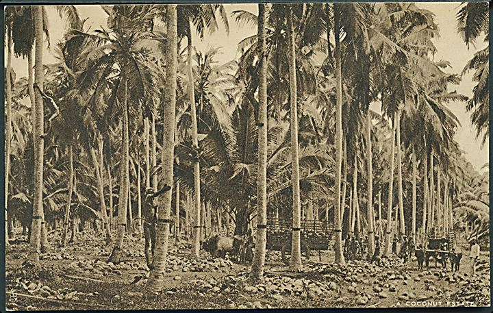 Raphael Tuck: A Coconot Estate. Ceylon British Empire Exhibition. Ceylon Committee.
