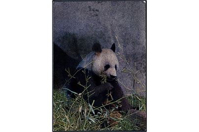 Shanghai. Panda. Hologram 3D postkort. China National publication u/no.