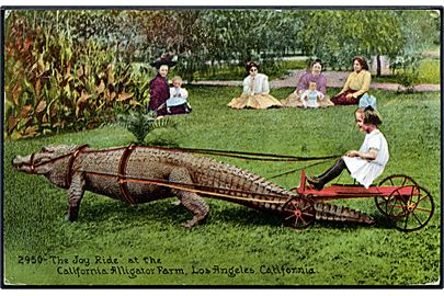 The Joy Ride at the California Alligator farm, Los Angeles, California. Edw. H. Mitchell no. 2950. (Afrevet mærke).