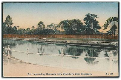 2nd Impounding Reservoir with Traveller's trees, Singapore. No. 20.