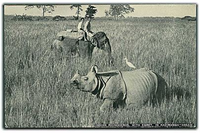 Indian Rhinoceros, With Egret in Kaziranga - Assam. Riding Elephant in background. E. P. Gee, Indian Wild Life Series no. 2.