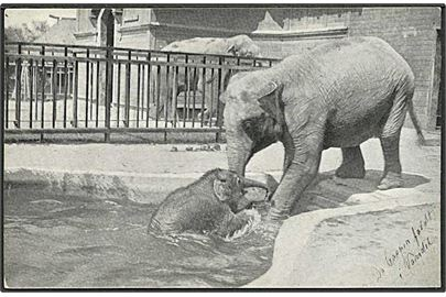 da DK lot danmark indgangen til koebenhavn zoo stenders no